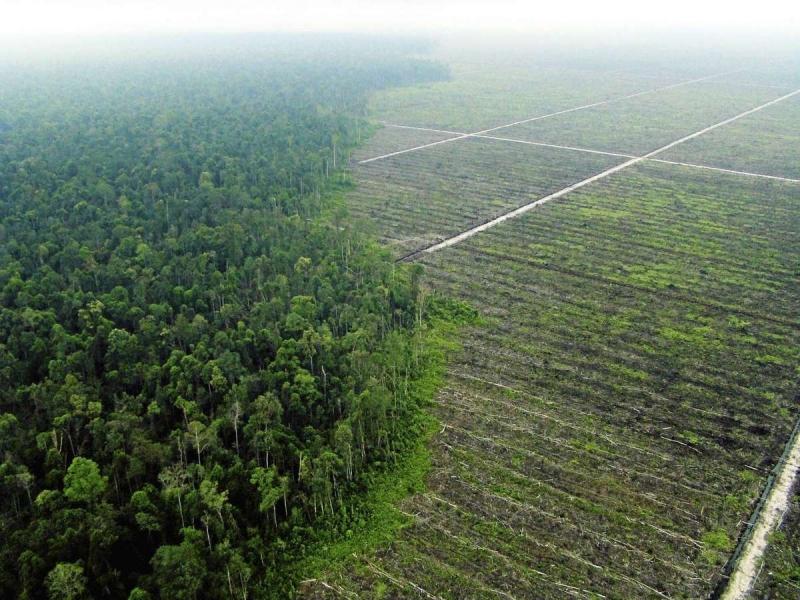 http://www.allehanda.se/opinion/insandare/amnesty-harnosand-barnarbete-och-diskriminering-av-kvinnor-pa-indonesiens-palmoljeplantager
